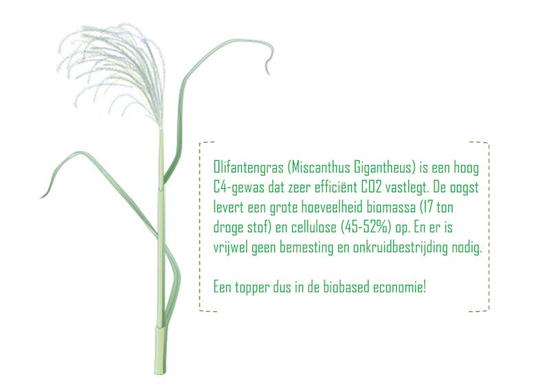 biobases gewas